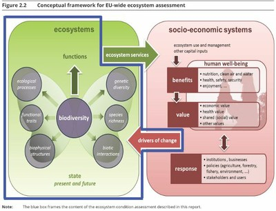 Conceptual framework for ecosystems assessment