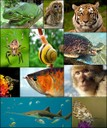 collage di specie animali